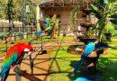 Zoo das Aves abre inscrições para estágio